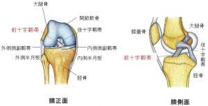 膝痛、前十字靭帯断裂からの復帰、回復する方法①